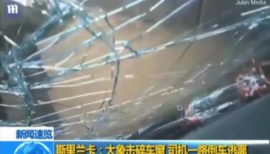 斯裏蘭卡:大象擊碎車窗 司機一路倒車逃離