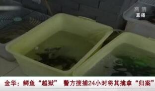 """鱷魚""""越獄"""" 警方擒拿""""歸案"""""""