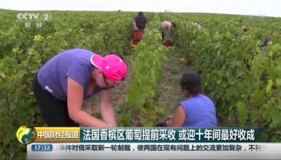 法國香檳區葡萄提前採收 或迎十年間最好收成