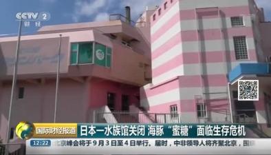 """日本一水族館關閉 海豚""""蜜糖""""面臨生存危機"""