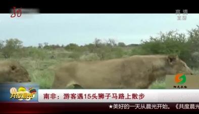 南非:遊客遇15頭獅子馬路上散步