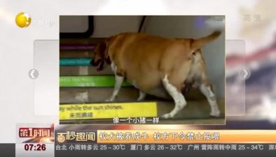校犬被養成牛 校方下令禁止投喂