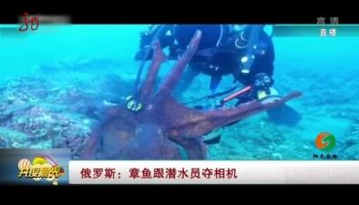 俄羅斯:章魚跟潛水員奪相機