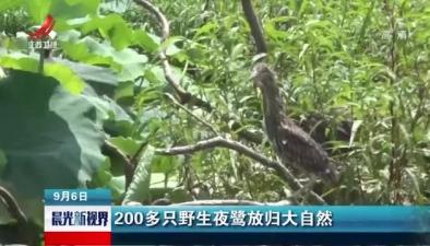 200多只野生夜鷺放歸大自然
