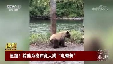 """逗趣!棕熊為撓癢竟大跳""""電臀舞"""""""
