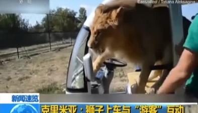 """克裏米亞:獅子上車與""""遊客""""互動"""