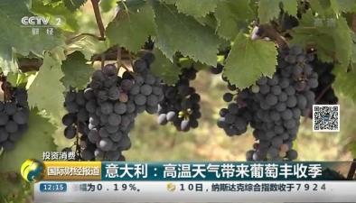 意大利:高溫天氣帶來葡萄豐收季