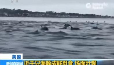美國:近千只海豚成群覓食 場面壯觀
