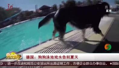 德國:狗狗泳池戲水告別夏天