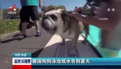 德國狗狗泳池戲水告別夏天