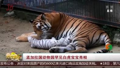 孟加拉國動物園罕見白虎寶寶亮相
