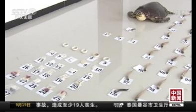 內蒙古:特大非法交易野生動物制品案告破