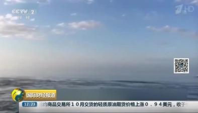 加拿大:遊客視頻記錄鯨躍出水面罕見畫面