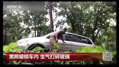黑熊被鎖車內 生氣打碎玻璃