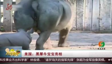 美國:黑犀牛寶寶亮相