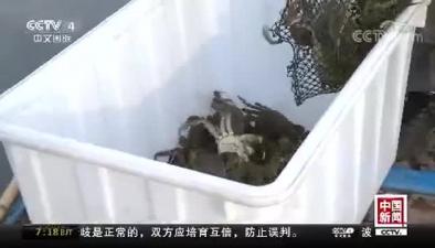 江蘇陽澄湖大閘蟹開捕 預計總産量1300噸