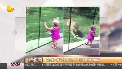 動物園一獅子欲偷襲女童 幸被玻璃墻阻隔