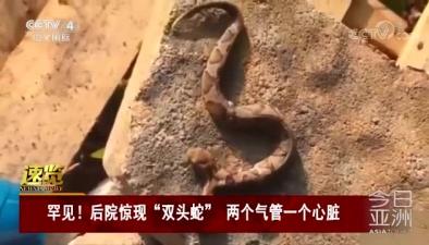 """罕見!後院驚現""""雙頭蛇"""" 兩個氣管一個心臟"""