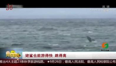 姥鯊也能遊得快 跳得高