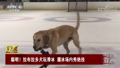 聰明!拉布拉多犬玩滑冰 溜冰場內秀絕技