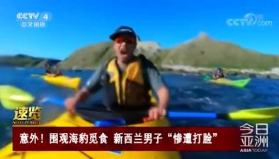 """意外!圍觀海豹覓食 新西蘭男子""""慘遭打臉"""""""