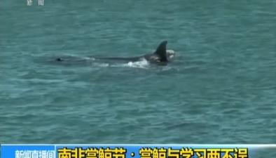 南非賞鯨節:賞鯨與學習兩不誤