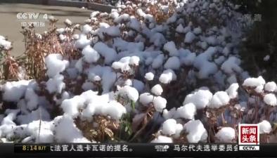 河北張家口:壩上迎來入秋以來第一場降雪