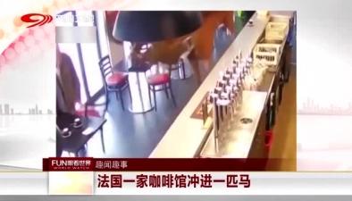 法國一家咖啡館衝進一匹馬
