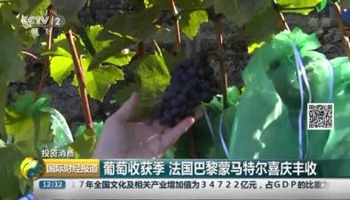 葡萄收獲季 法國巴黎蒙馬特爾喜慶豐收
