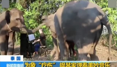 """泰國:為象""""療傷"""" 鋼琴家彈奏美妙音樂"""