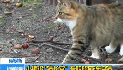 """俄羅斯:小鎮設""""貓長官"""" 專職照顧流浪貓"""