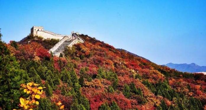 北京:降溫明顯 八達嶺進入紅葉觀賞期