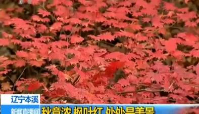 遼寧本溪:秋意濃 楓葉紅 處處是美景