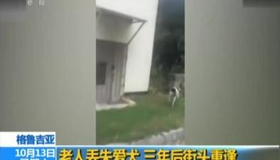 格魯吉亞:老人丟失愛犬 三年後街頭重逢