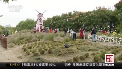 網紅粉黛花田變身枯草地