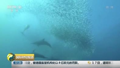 攝影師直擊南非沙丁魚大遷徙