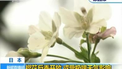 日本:櫻花反季開放 或受極端天氣影響