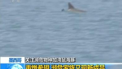關注瀕危物種加灣鼠海豚:重燃希望 瀕危家族又現新成員