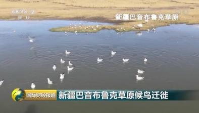 新疆巴音布魯克草原候鳥遷徙