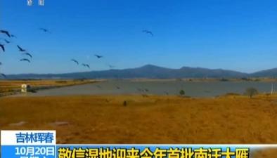 吉林琿春:敬信濕地迎來今年首批南遷大雁