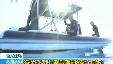 留尼汪島:海洋巡邏隊呼吁觀鯨遊客守規矩