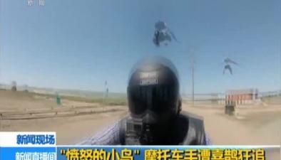 """""""憤怒的小鳥"""" 摩托車手遭喜鵲狂追"""