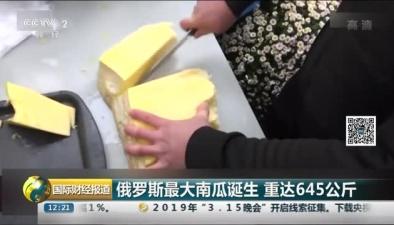 俄羅斯最大南瓜誕生 重達645公斤