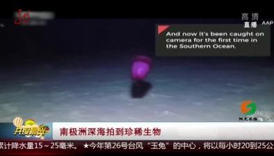 南極洲深海拍到珍稀生物