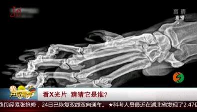 看X光片 猜猜它是誰?