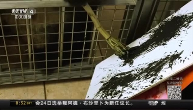 """奧地利:大熊貓成""""畫家"""" 作品標價數千元"""