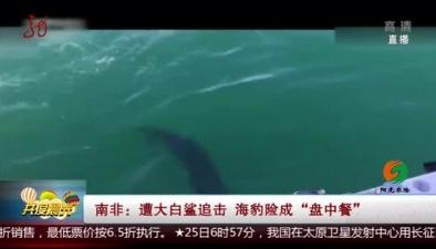 """南非:遭大白鯊追擊 海豹險成""""盤中餐"""""""