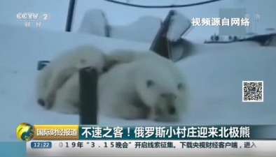 不速之客!俄羅斯小村莊迎來北極熊