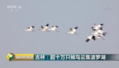 吉林:超十萬只候鳥雲集波羅湖