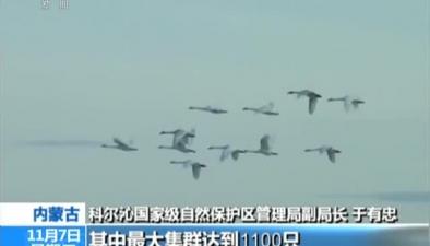 內蒙古:興安盟迎來候鳥集群過境高峰